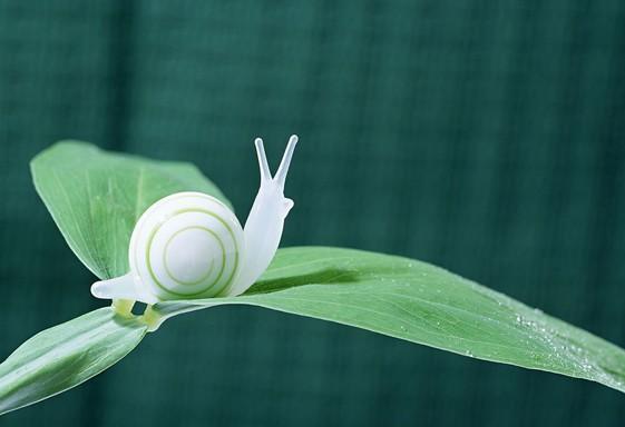 """让我一下子就上爬了这首歌,心里默默地记住了""""蜜蜂一步一步往记住…""""小我要在美丽的花朵上采蜜图片"""