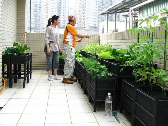 打造阳台小菜园,最in的绿色生活方式