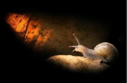 与蜗牛同行的日子