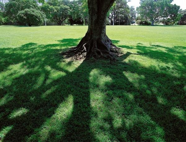 透过大树看自己