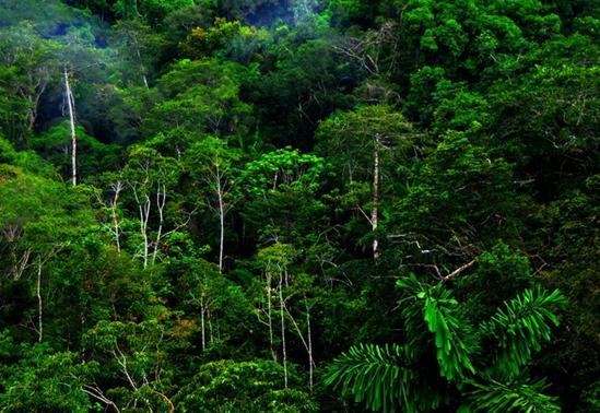 砍到一棵树的同时伤害了另外的17棵树,对雨林里的动物造成了伤害.