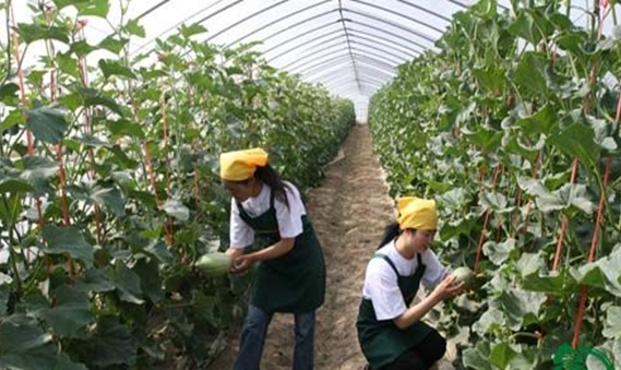 有机食品是来自于有机农业耕种方式的产物,有机农业耕种方式遵循农业生产过程中不使用任何化学化肥、农药等,而是通过自然规律,采用可持续发展的农业积水手段,以人力、畜力为主要劳动力进行耕种。那么,我们为什么要购买这种通过有机耕种方式生产的有机食品呢?  首先,是节能环保的需要。土壤是人类食物来源的基础,工业化社会的耕种方式为求取产量在土壤中大量使用化学肥料来促进植物生长,结果是使土壤迅速贫瘠和损坏。另外,化学肥料也污染了在大地中的水源。现代化的耕种方式使用了更多的化学肥料,从而耗费了更多的石油,导致了能源使用在