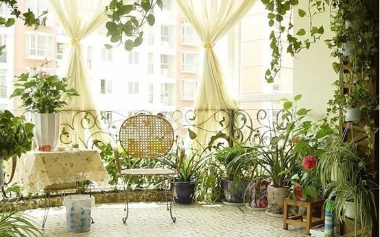 绿树成荫,轻松打造我家的清凉美地