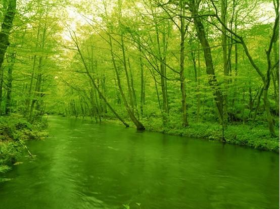 美丽森林背景矢量图