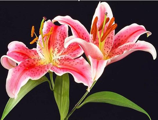 夏日养花的几个小诀窍