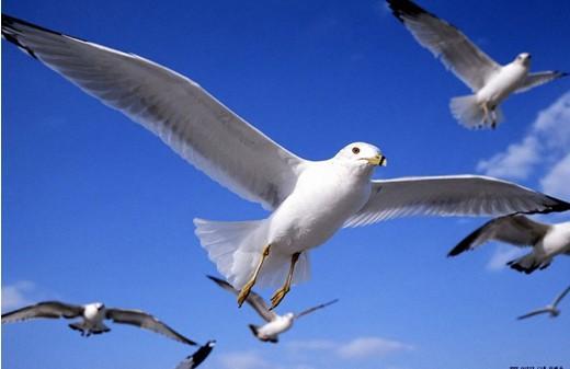还鸟儿一片飞翔的天空
