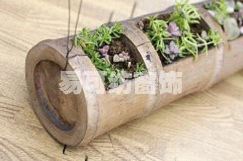 矿泉水大桶做花盆
