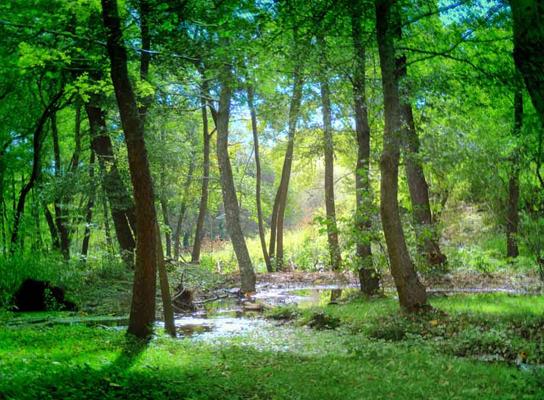 守护绿色环保